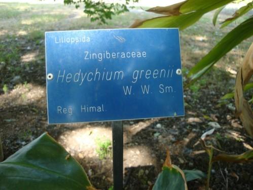 Jardin botanique de Palerme a g