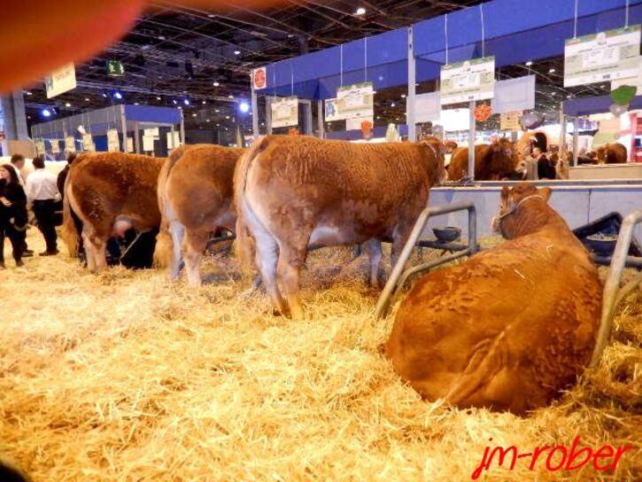 Salon de l'Agriculture 2015. La Journée Limousine, un rendez-vous de limousin