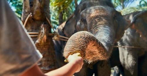 Sanctuaire pour éléphants en Haute Vienne