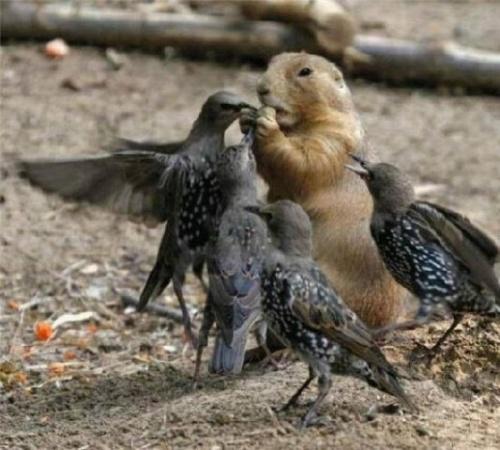 Des animaux parlant
