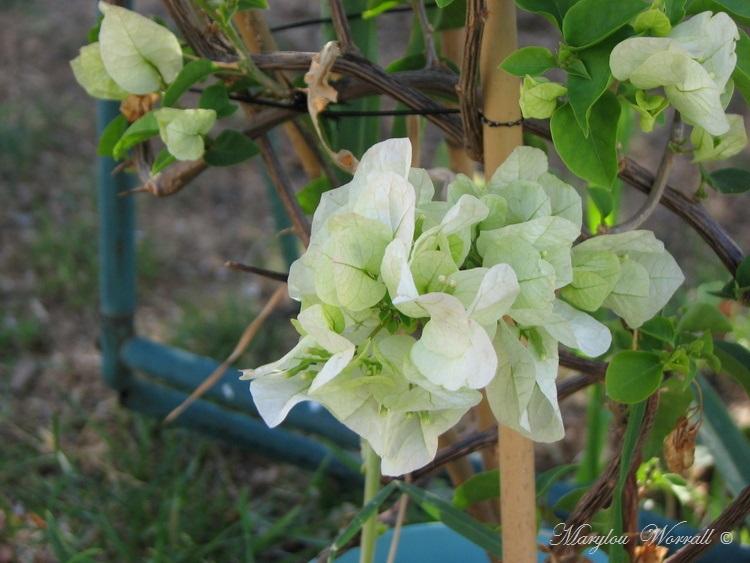 Ingersheim : Deux journées au jardin