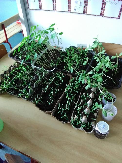 Semis et plantations de fleurs