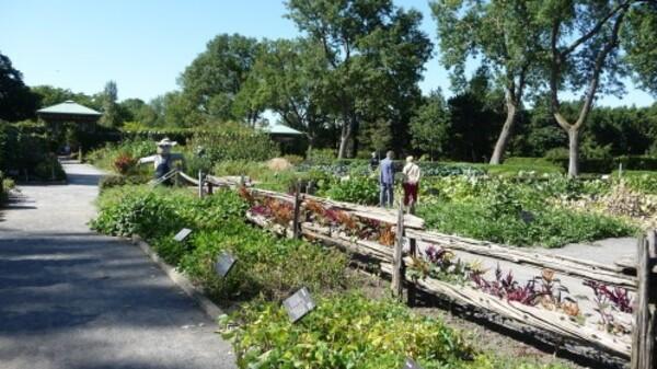 Jardin botanique (96)