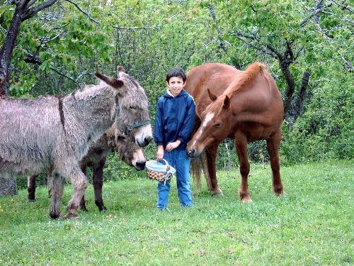 rencontre avec les animaux