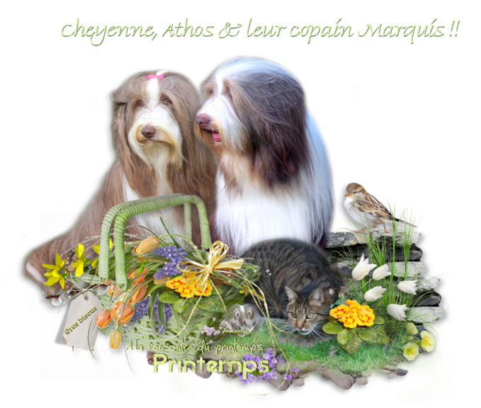 Cheyenne, Athos & Marquis
