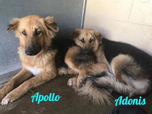 (-*♥*-)  2 chiens inséparables, trouvent une nouvelle famille ensemble  (-*♥*-)