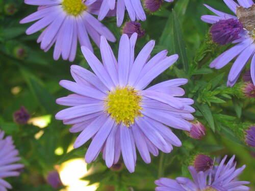 fleurs de toutes les couleurs - les fleurs s'affichent