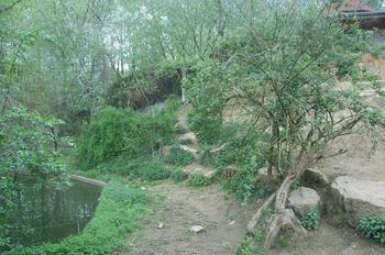 Zoo Osnabruck d50 2012 097