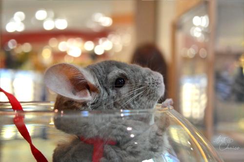 Salon des animaux exotiques avril 2015