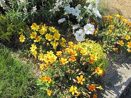 fleurs-7676.JPG