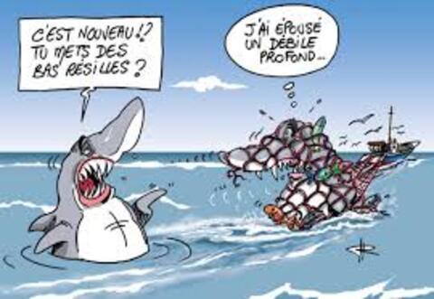 Un requin de 2,5 mètres sème la panique à Majorque