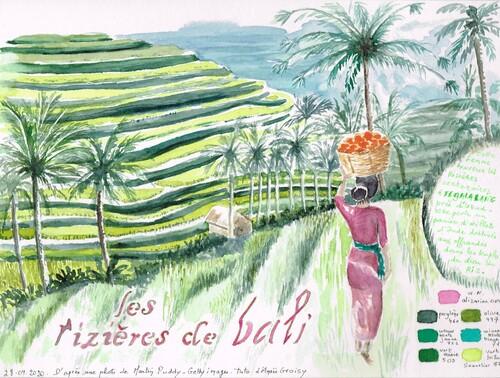 Les rizières de Bali, aquarelle