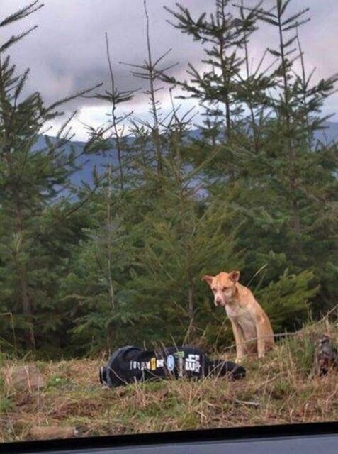 Bear se rapproche doucement et observe