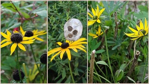Top 5 des floraisons couleur soleil