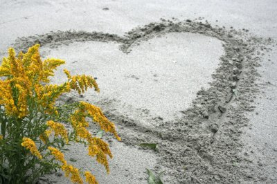 Le coeur volé