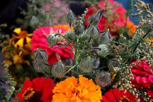 Des compagnes pour mes roses : Hibiscus cannabinus