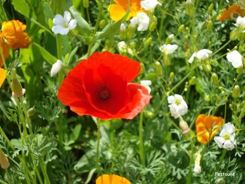 Les plantes bio-indicatrices : une aide précieuse.