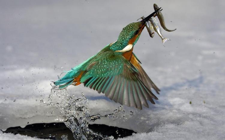 25 Images d'oiseaux