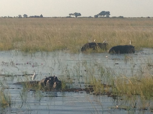 Chobe River...