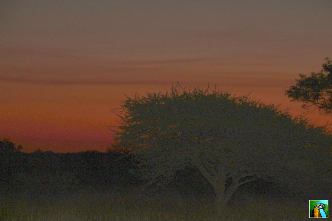 AFRIQUE DU SUD : Juin 2018 : Qu'allons nous découvrir dans ce nouveau safari 1/2
