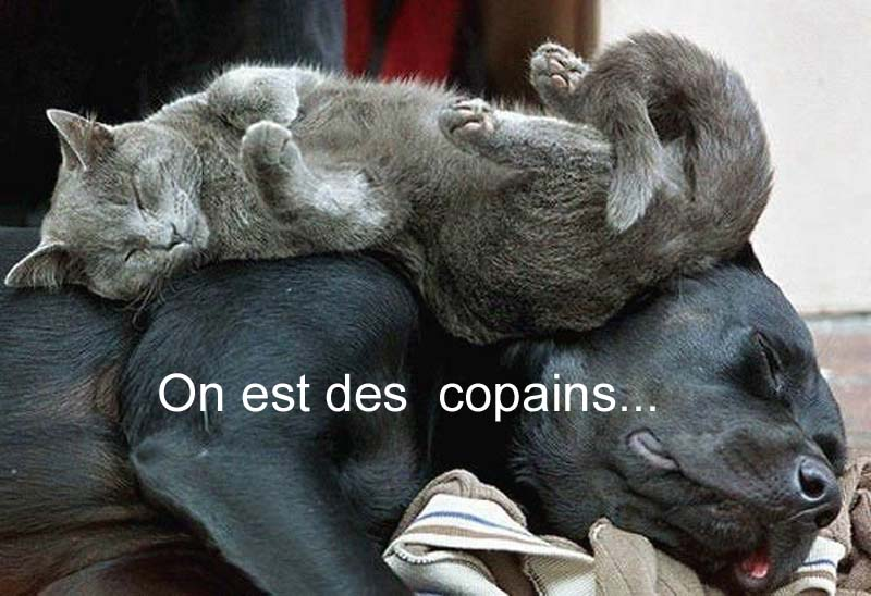 CHIEN CHAT