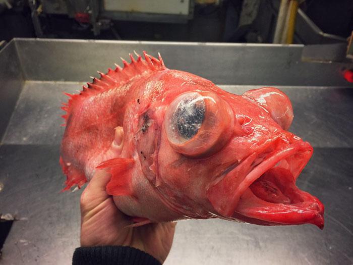 Images de bateaux/poissons 2:  16 images de poissons effrayants