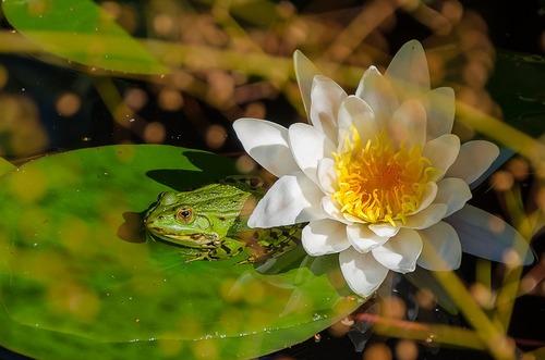 La grenouille et la fourmi...