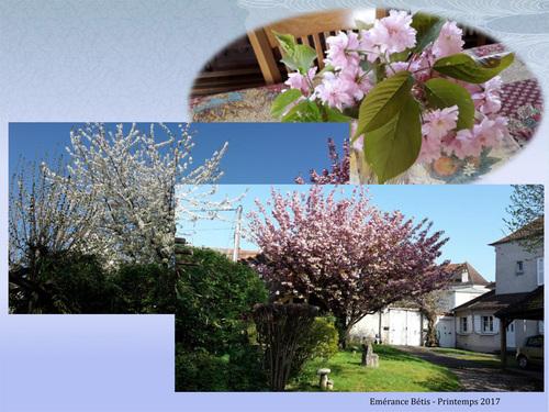 Le printemps dans mon jardin