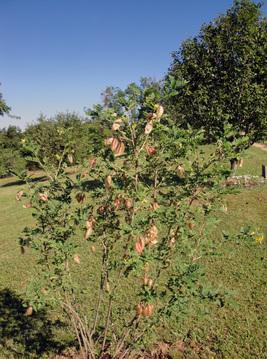 Le parc de Vabre et son arboretum