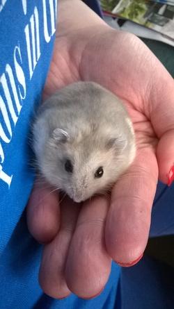 apprivoisé son hamster