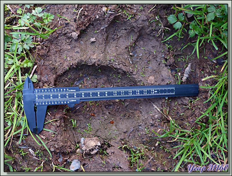 13/07/2013 : circuit ours quelque part dans les Pyrénées