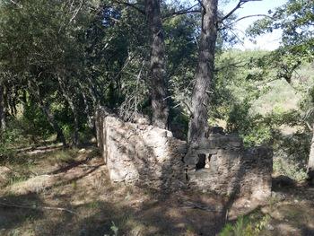Une cabane dont le toit a disparu il y a lontemps