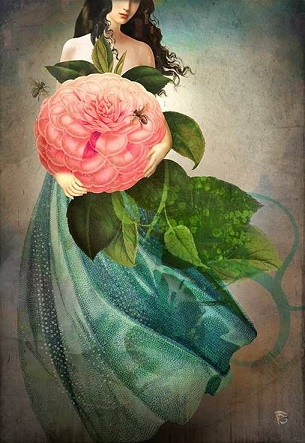 La rose rouge ...