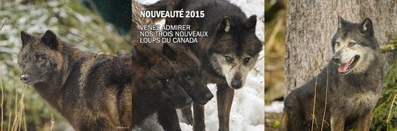 Alpha, Le Parc des Loups du Mercantour