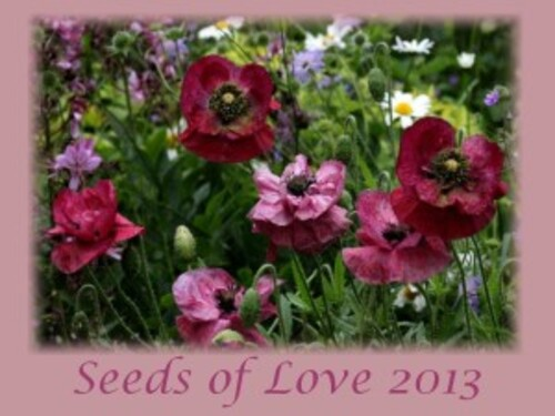 Seeds of Love : Portrait des Anciens : Isabelle