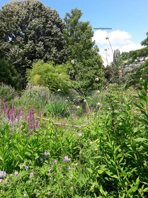 Retour au jardin botanique..