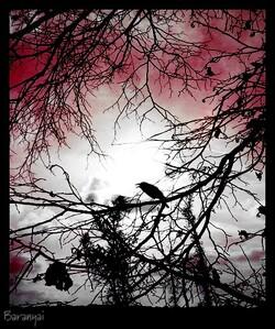 Oiseau de malheur ... avec Touteseule