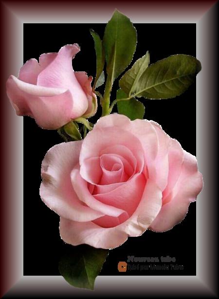 Tube fleurs 2907