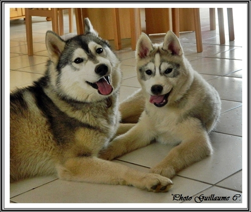 Ianko et Houka