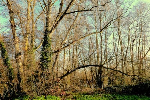 z05 - Dans le bois