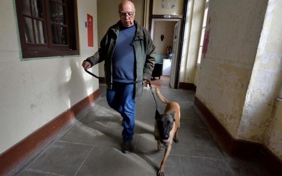 Des chiens de l'Institut Curie s'entraînent à détecter le cancer du sein