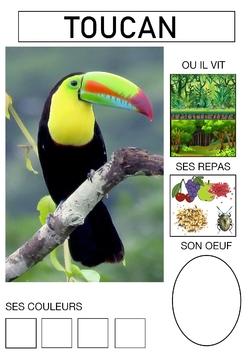 Le cahier des oiseaux (3)