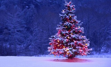 http://www.canape.net/wp-content/uploads/bfi_thumb/deco-sapin-noel-2xxb5cmr0lqnl56aw50hze.jpg
