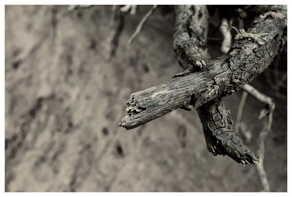 croix de bois
