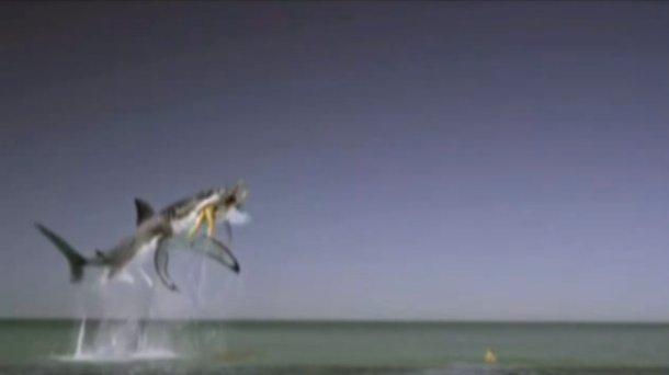 Ce requin jaillit de l'eau dans une fausse publicité pour des tampax