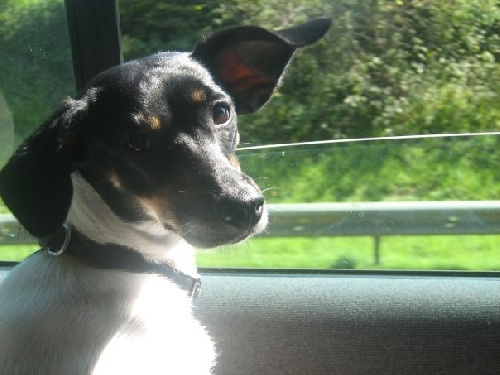 Ma chienne Câline