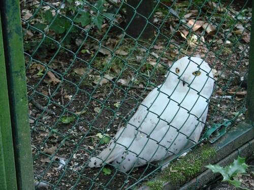 Les oiseaux du zoo de Beauval,