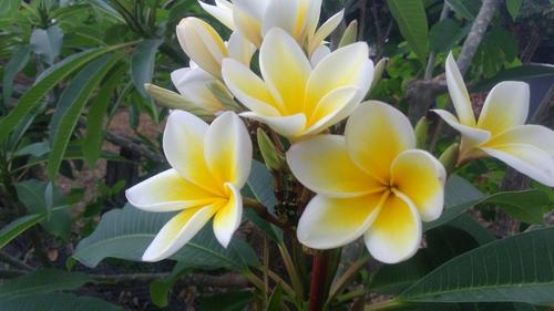 Quelques fleurs aux lotissements de Grande Montagne et à Ste-Thérèse