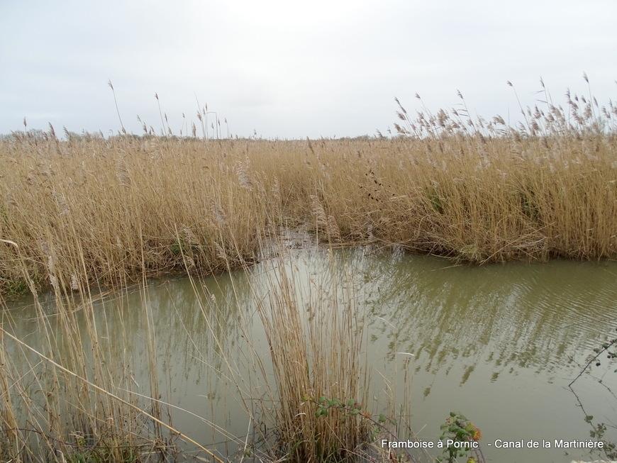Canal de la Martinière décembre 2019 - 44 -