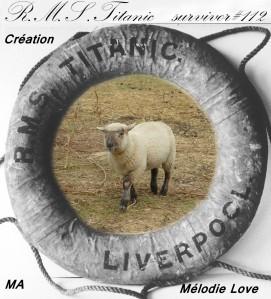 Mouton-copiry-MA.JPG
